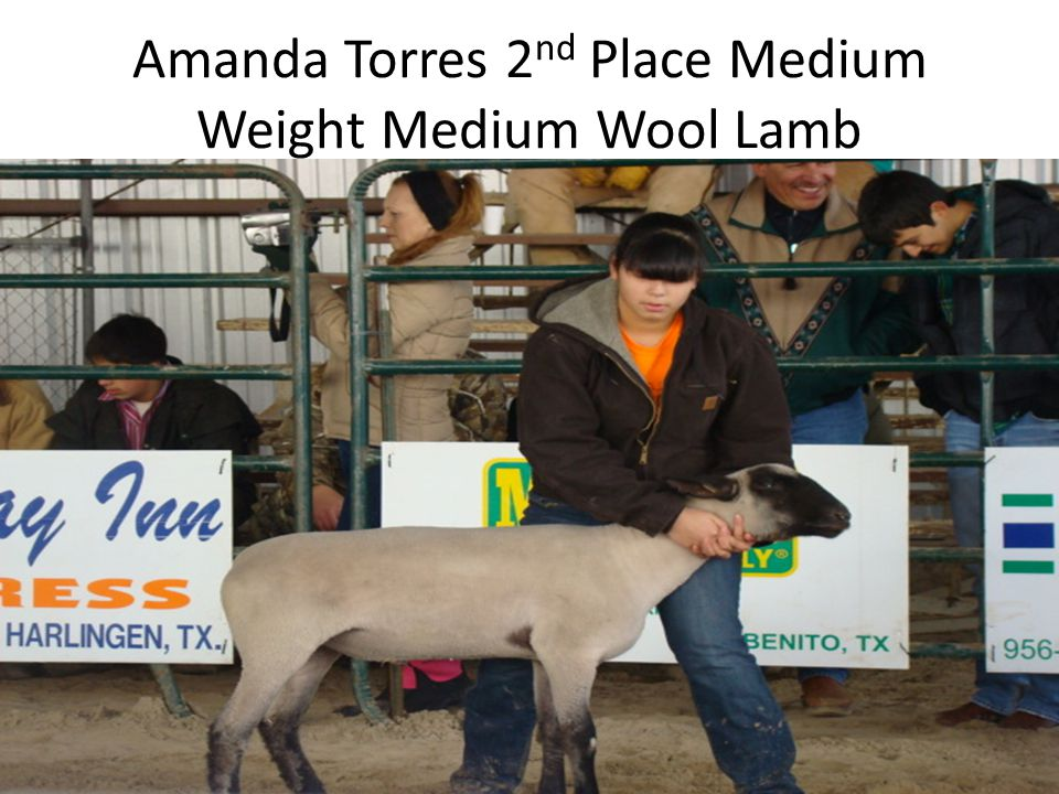 Amanda Torres 2 nd Place Medium Weight Medium Wool Lamb