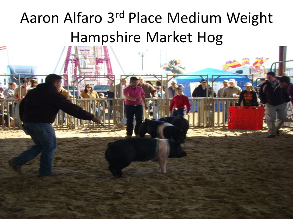 Aaron Alfaro 3 rd Place Medium Weight Hampshire Market Hog