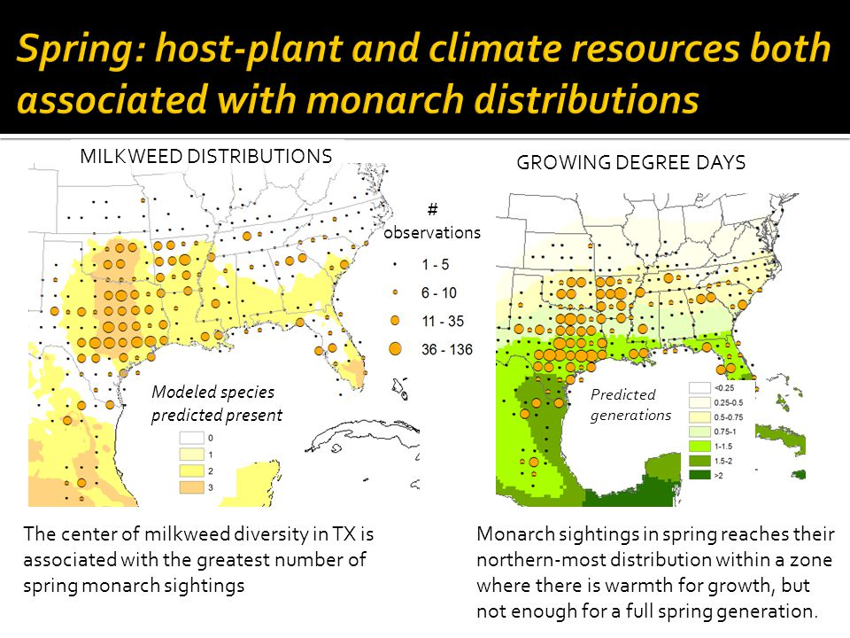 The center of milkweed diversity in TX is associated with the greatest number of spring monarch sightings Monarch sightings in spring reaches their northern-most distribution within a zone where there is warmth for growth, but not enough for a full spring generation.