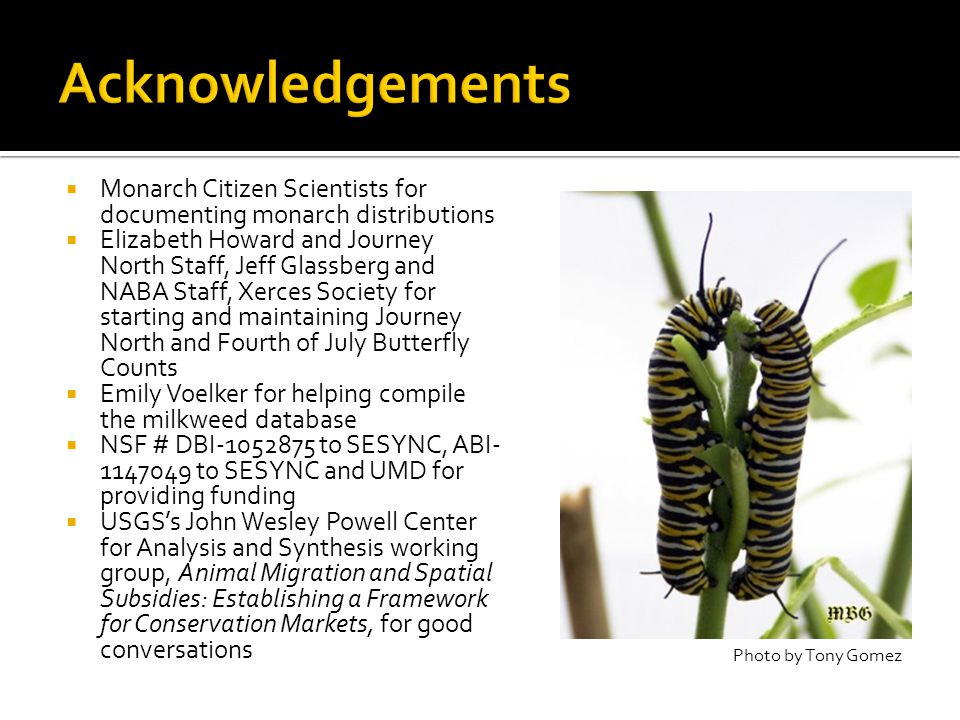  Monarch Citizen Scientists for documenting monarch distributions  Elizabeth Howard and Journey North Staff, Jeff Glassberg and NABA Staff, Xerces Society for starting and maintaining Journey North and Fourth of July Butterfly Counts  Emily Voelker for helping compile the milkweed database  NSF # DBI-1052875 to SESYNC, ABI- 1147049 to SESYNC and UMD for providing funding  USGS's John Wesley Powell Center for Analysis and Synthesis working group, Animal Migration and Spatial Subsidies: Establishing a Framework for Conservation Markets, for good conversations Photo by Tony Gomez