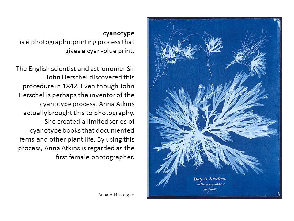 cyanotype is a photographic printing process that gives a cyan-blue print.
