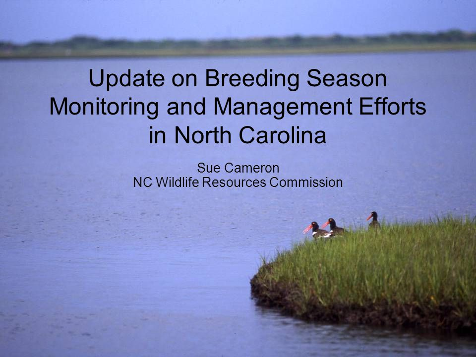Update on Breeding Season Monitoring and Management Efforts in North Carolina Sue Cameron NC Wildlife Resources Commission