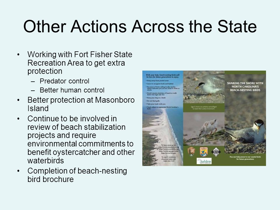 Other Actions Across the State Working with Fort Fisher State Recreation Area to get extra protection –Predator control –Better human control Better p