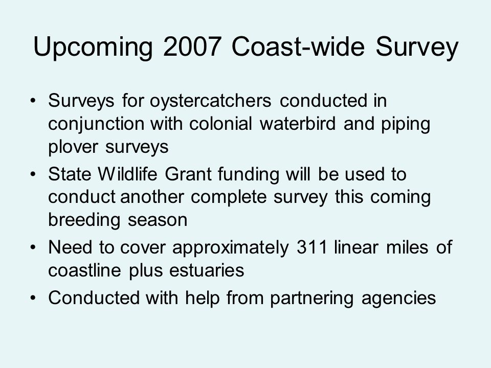 Upcoming 2007 Coast-wide Survey Surveys for oystercatchers conducted in conjunction with colonial waterbird and piping plover surveys State Wildlife Grant funding will be used to conduct another complete survey this coming breeding season Need to cover approximately 311 linear miles of coastline plus estuaries Conducted with help from partnering agencies