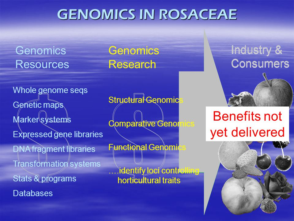 GENOMICS IN ROSACEAE Genomics Resources Genomics Research Whole genome seqs Genetic maps Marker systems Expressed gene libraries DNA fragment librarie
