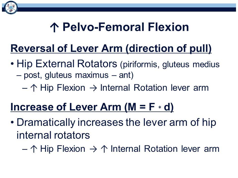 ↑ Pelvo-Femoral Flexion Reversal of Lever Arm (direction of pull) Hip External Rotators (piriformis, gluteus medius – post, gluteus maximus – ant) – ↑