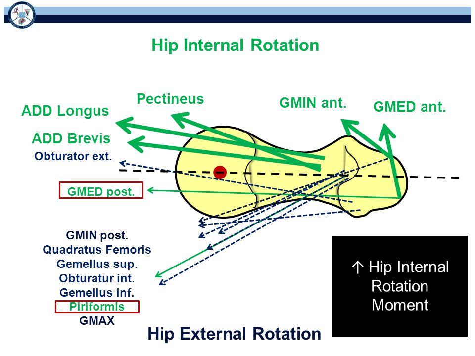 Hip External Rotation Hip Internal Rotation GMIN ant. GMED ant. Pectineus ADD Longus ADD Brevis Obturator ext. GMED post. GMIN post. Quadratus Femoris