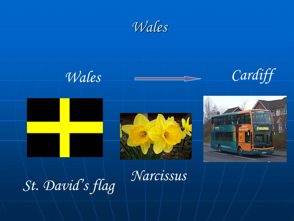 Wales Wales Wales Cardiff St. David's flag Narcissus