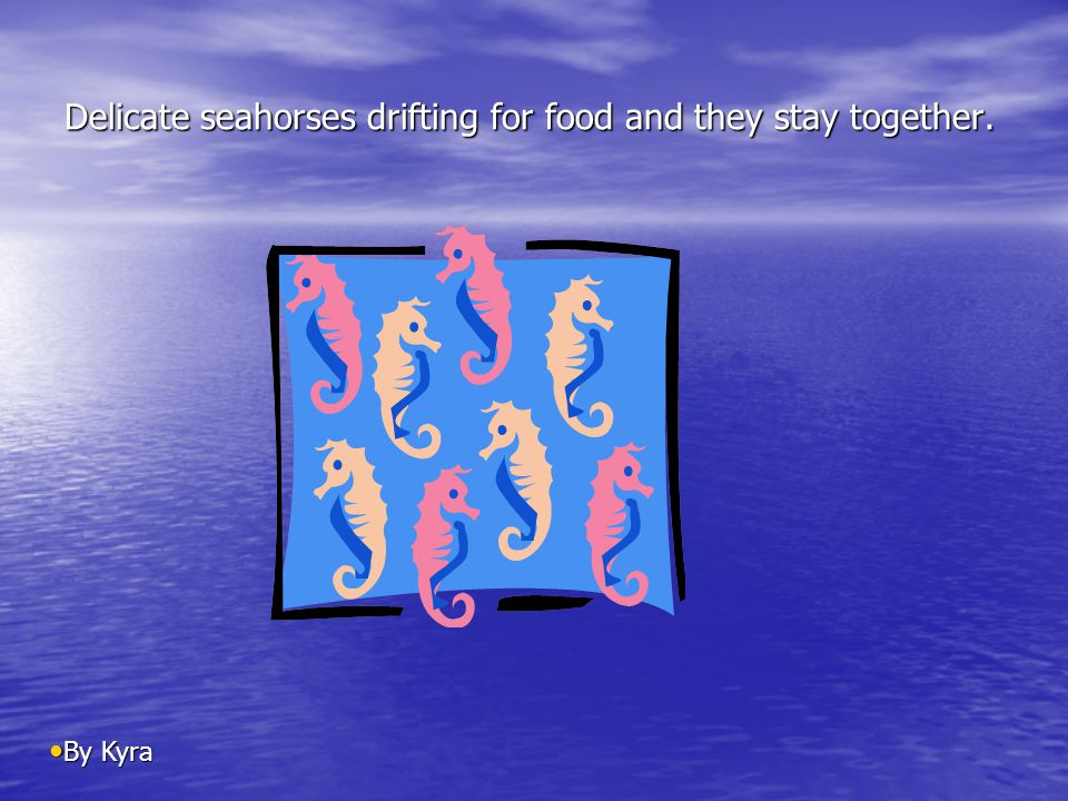 Delicate seahorses drifting for food and they stay together. By Kyra By Kyra