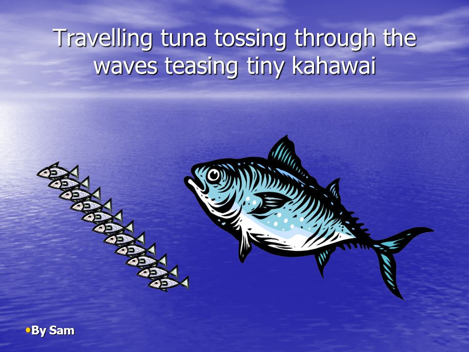 Travelling tuna tossing through the waves teasing tiny kahawai By Sam By Sam