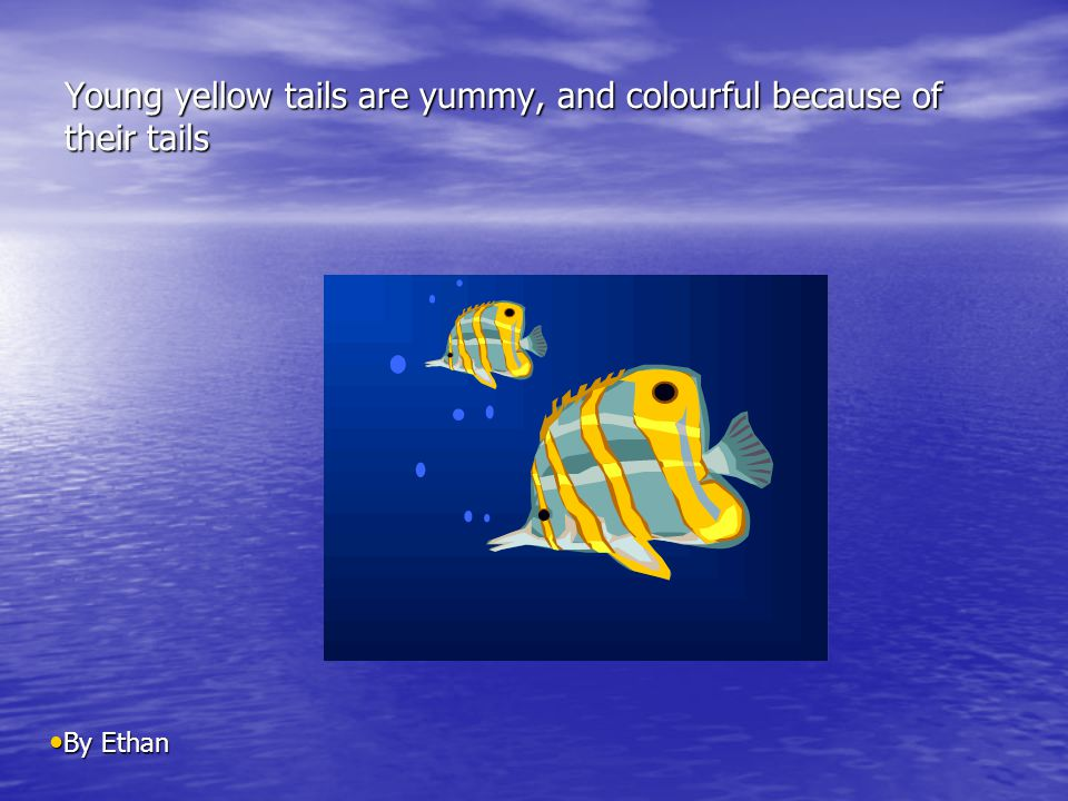 Young yellow tails are yummy, and colourful because of their tails By Ethan By Ethan