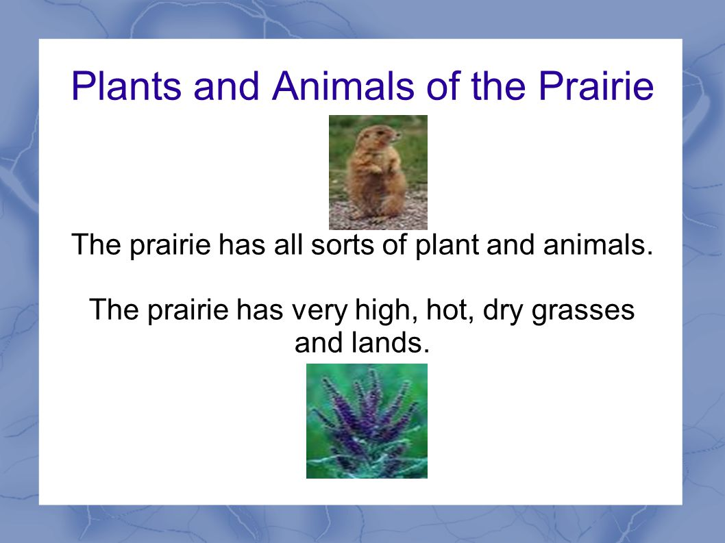 Plants and Animals of the Prairie The prairie has all sorts of plant and animals.
