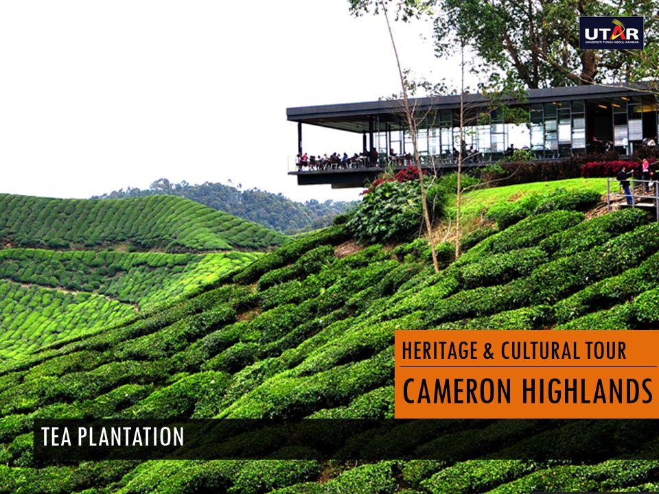 HERITAGE & CULTURAL TOUR CAMERON HIGHLANDS TEA PLANTATION