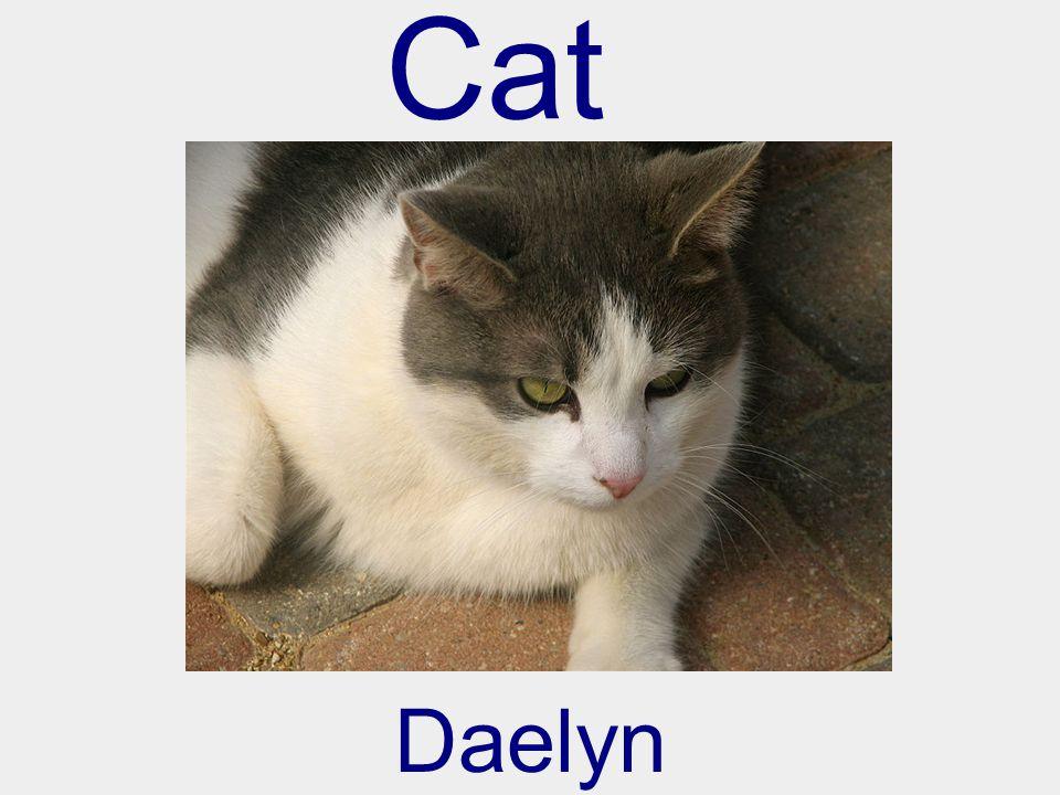 Cat Daelyn