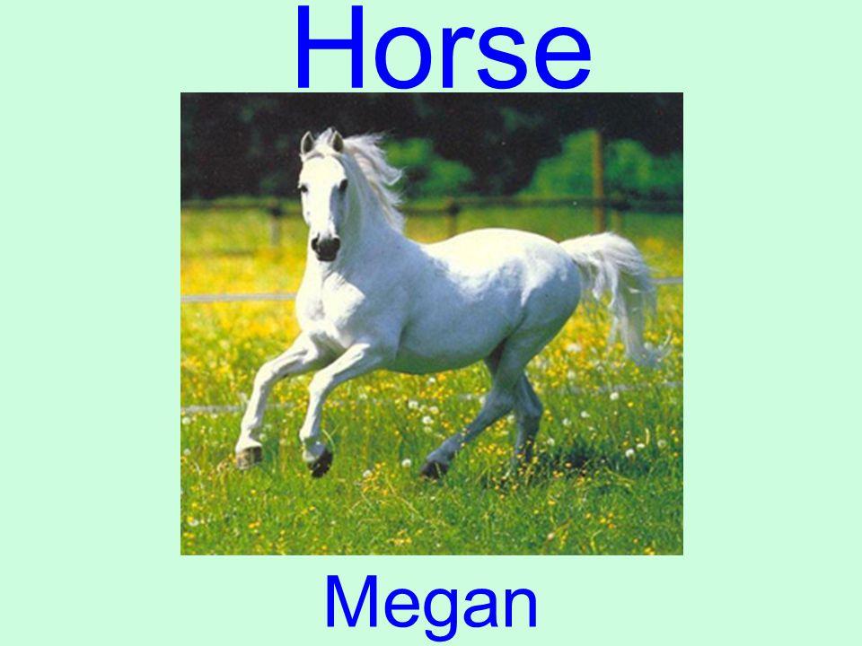 Horse Megan