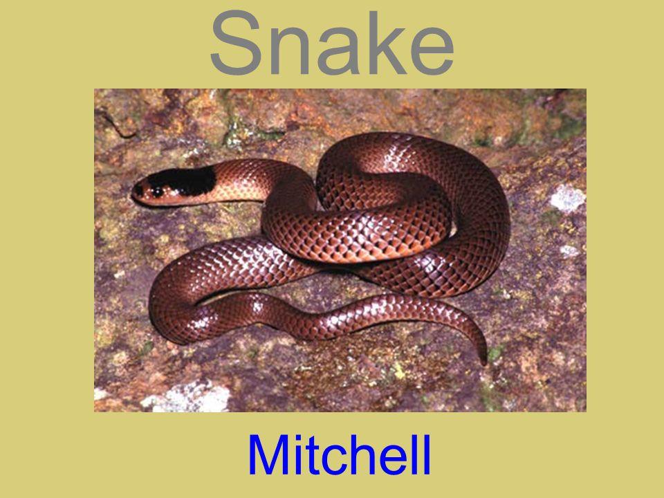 Snake Mitchell