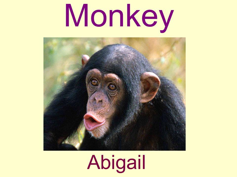Monkey Abigail