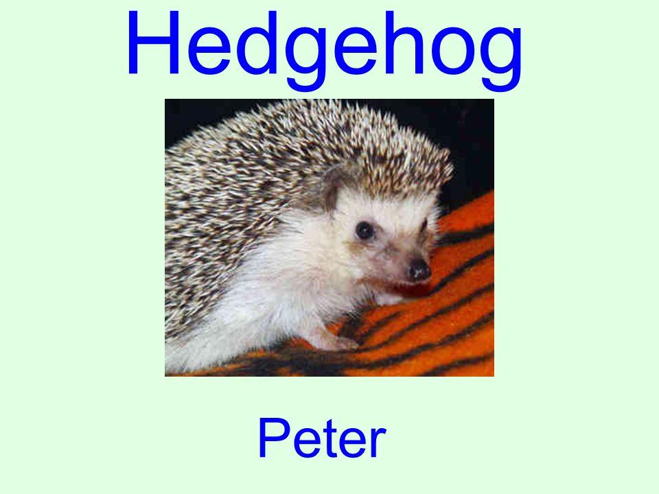Hedgehog Peter