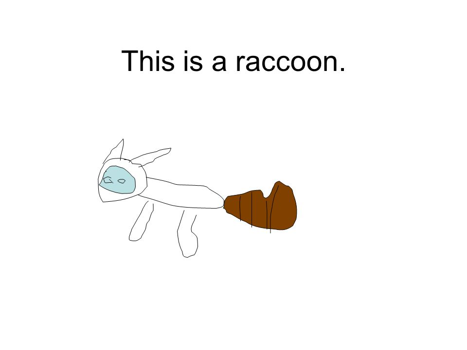 This is a raccoon.