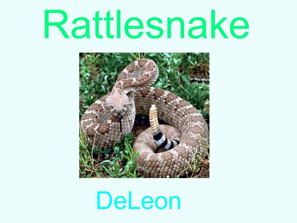 Rattlesnake DeLeon