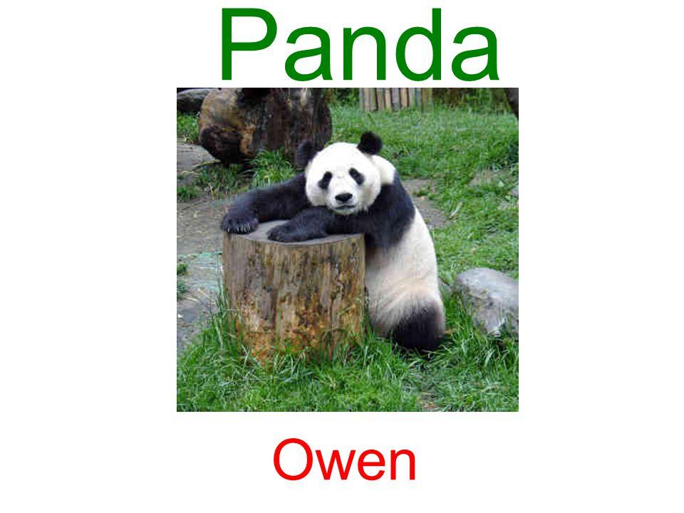Panda Owen