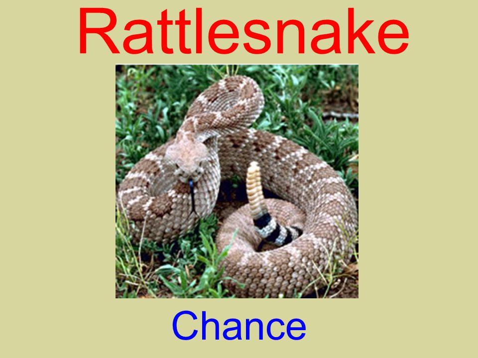 Rattlesnake Chance