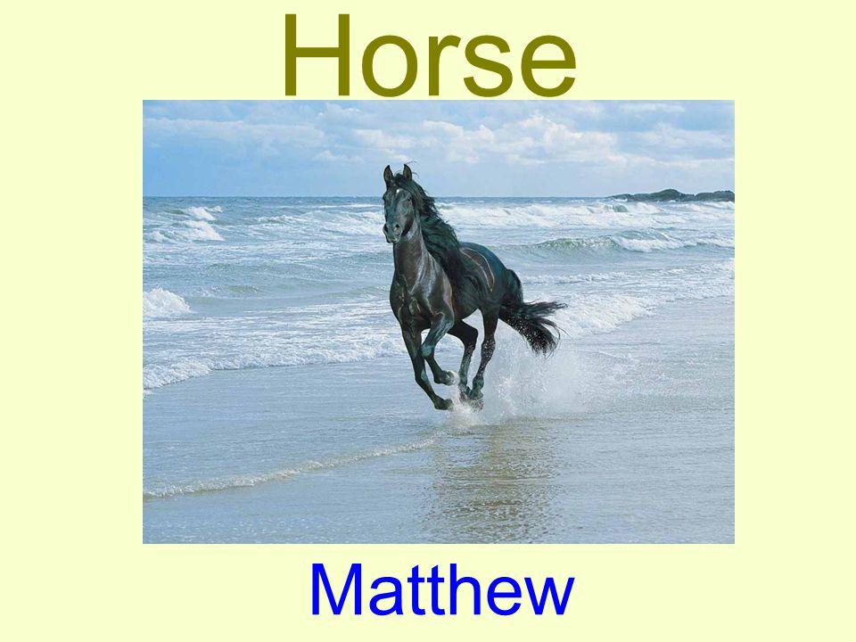 Horse Matthew
