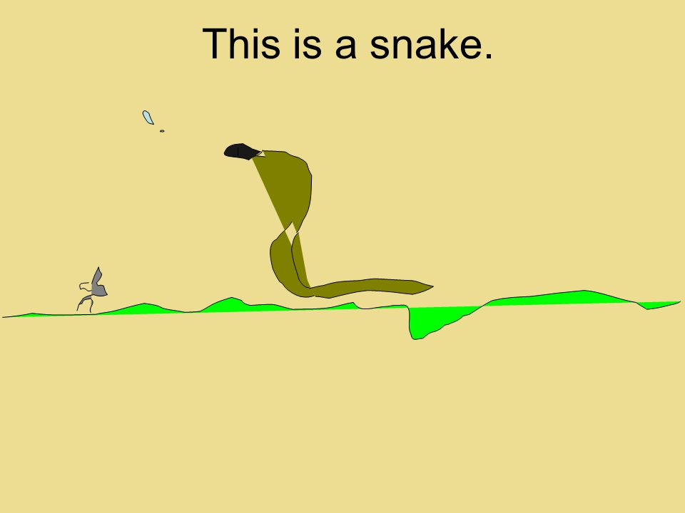 This is a snake.