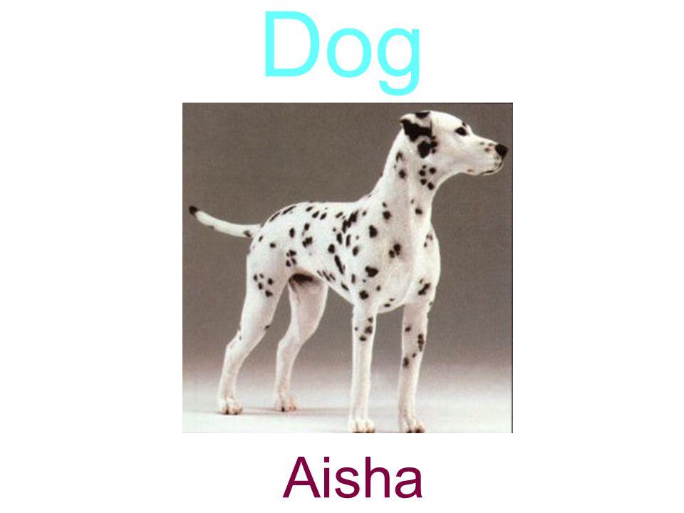 Dog Aisha