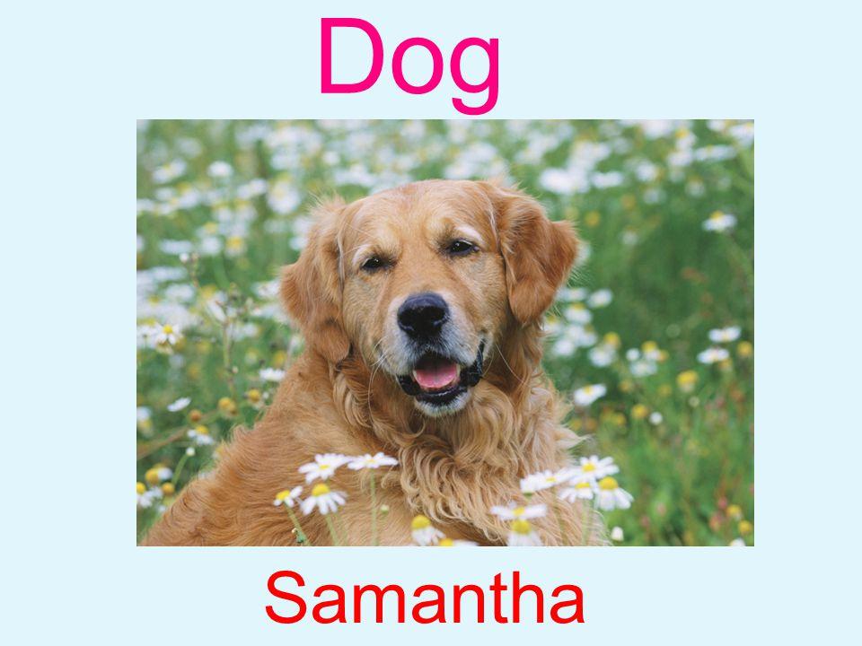 Dog Samantha