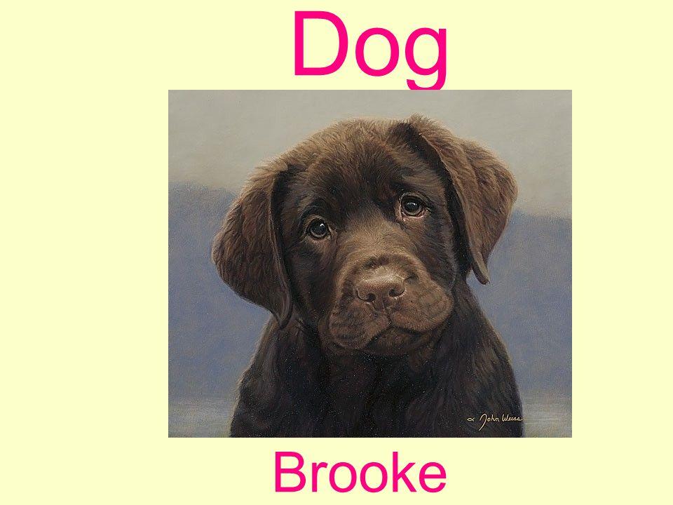 Dog Brooke