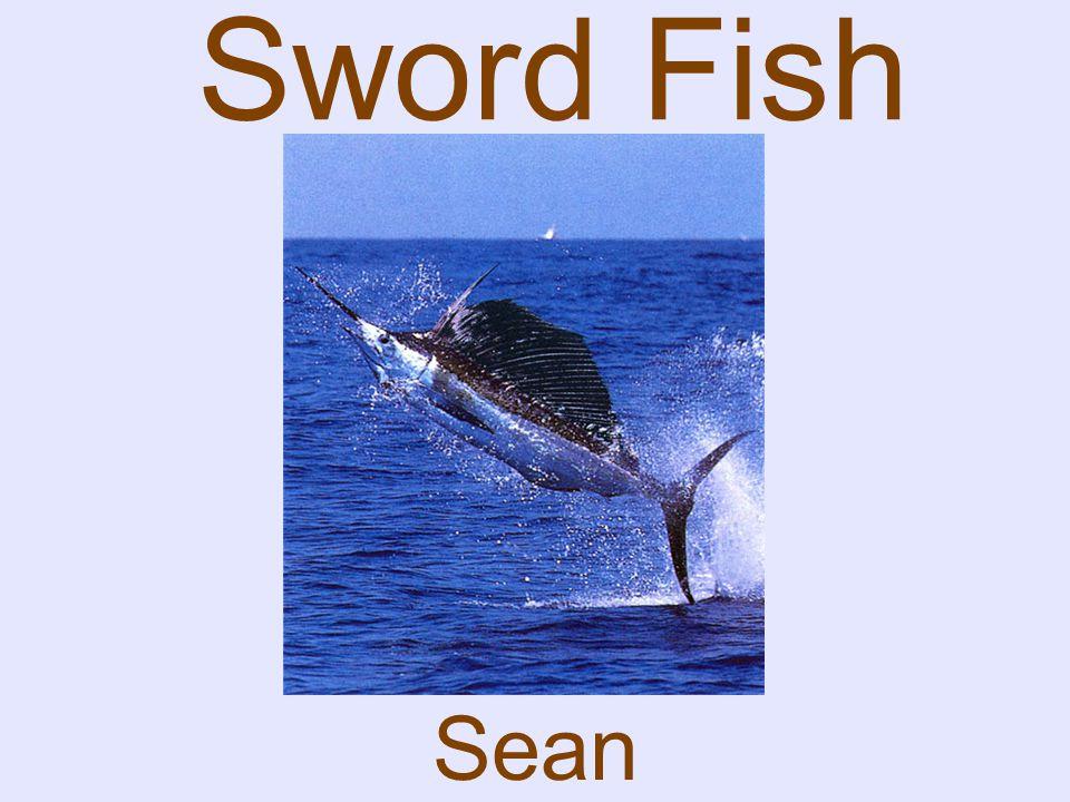 Sword Fish Sean