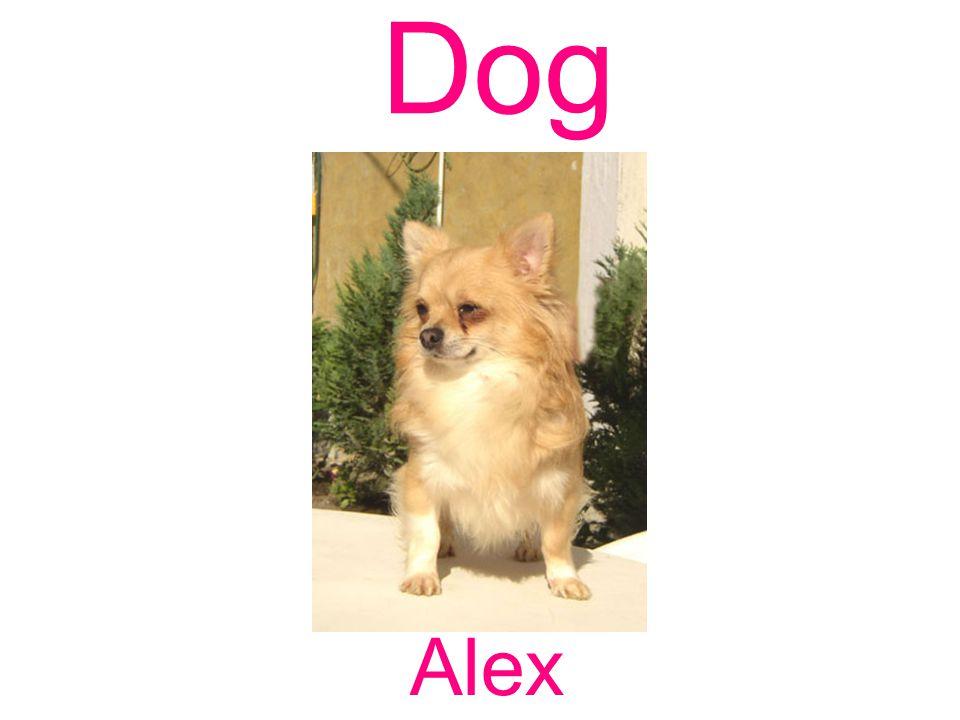 Dog Alex