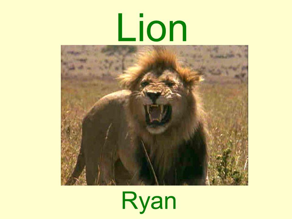 Lion Ryan