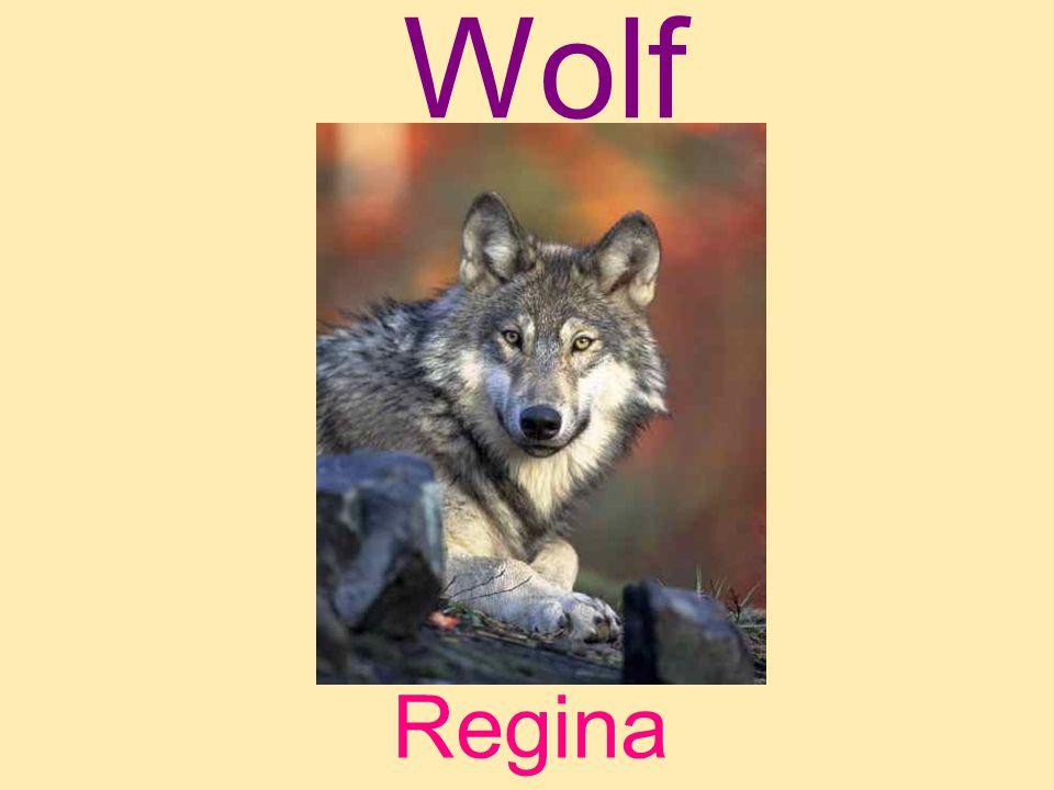 Wolf Regina