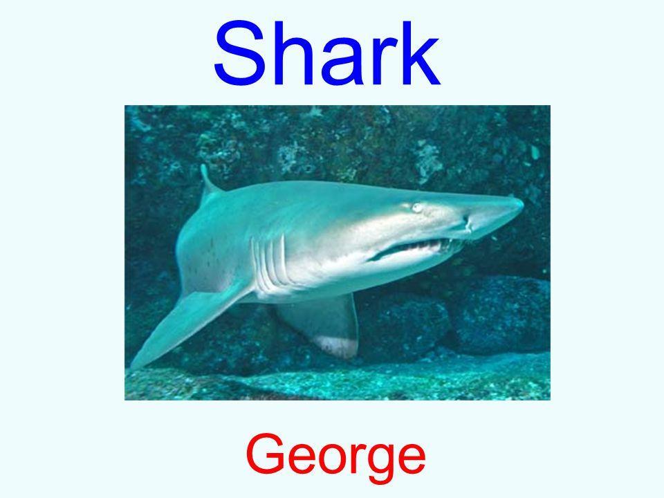 Shark George