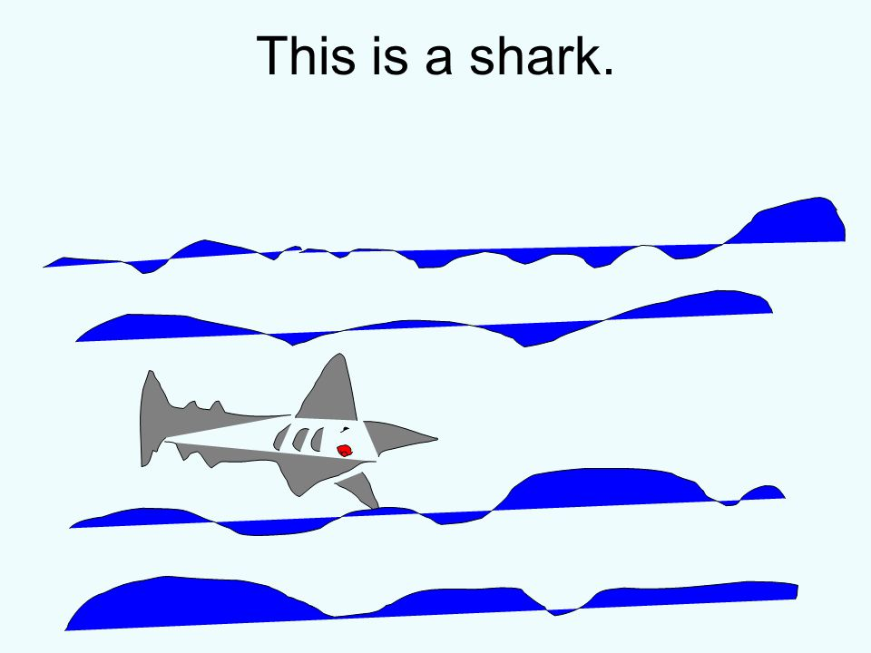 This is a shark.
