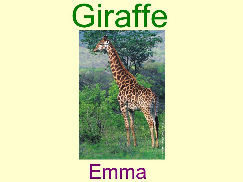 Giraffe Emma