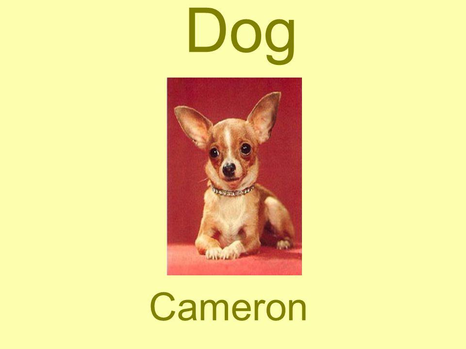 Dog Cameron