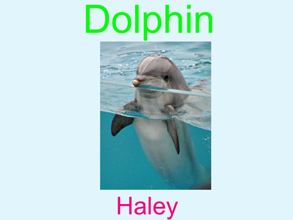 Dolphin Haley