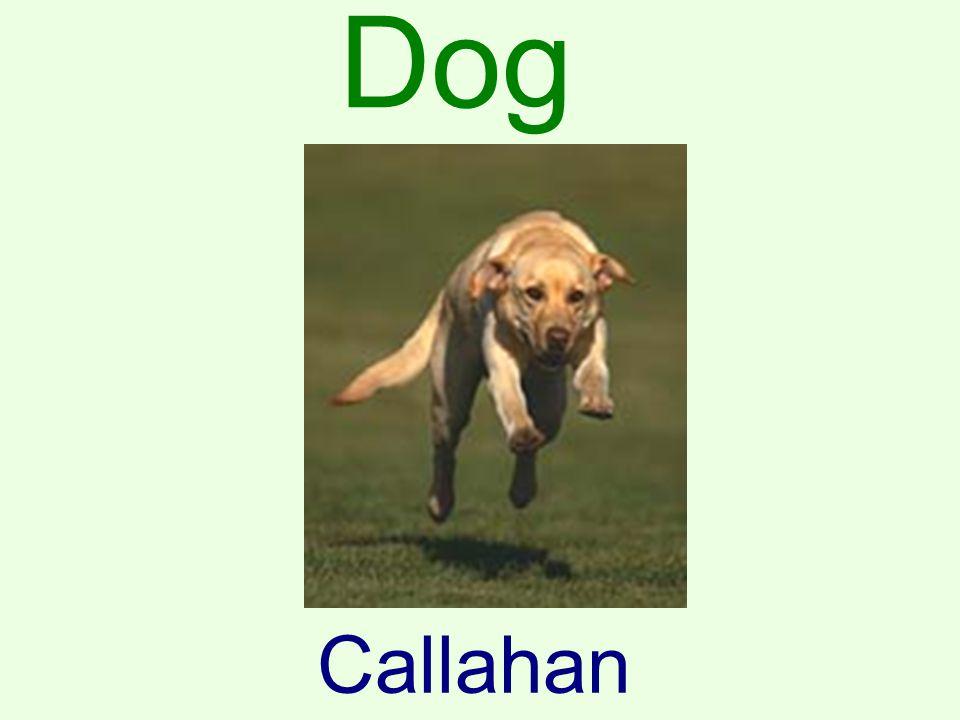 Dog Callahan