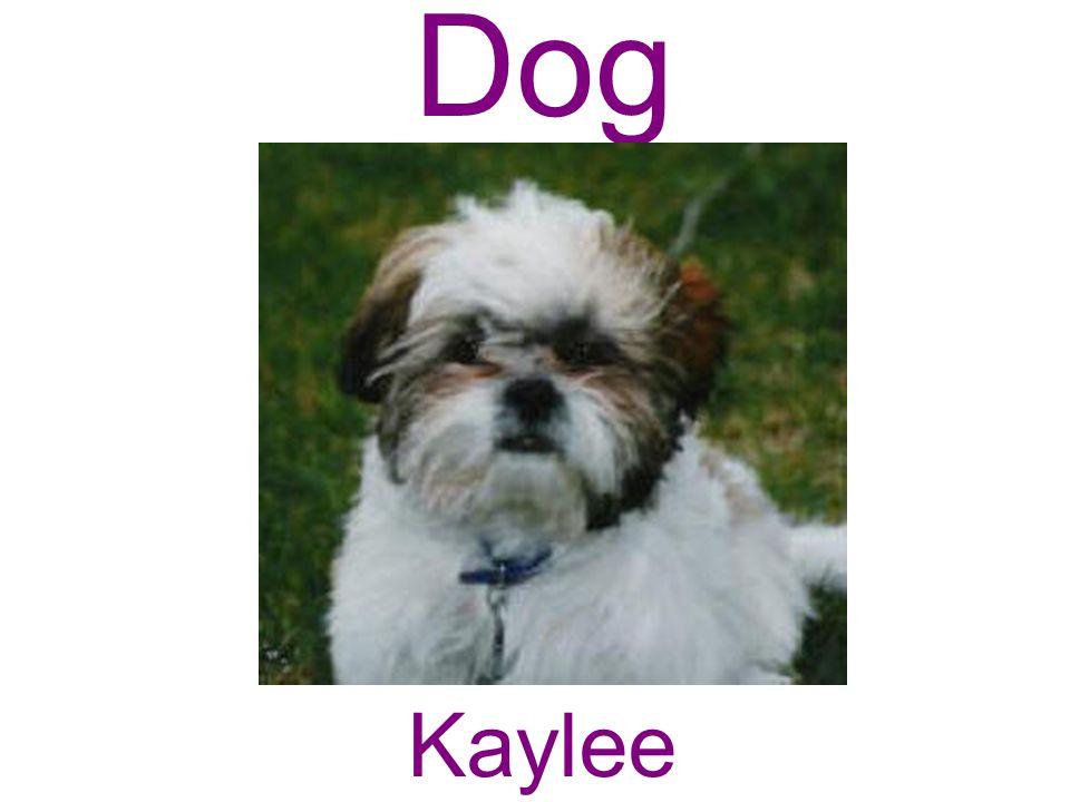 Dog Kaylee
