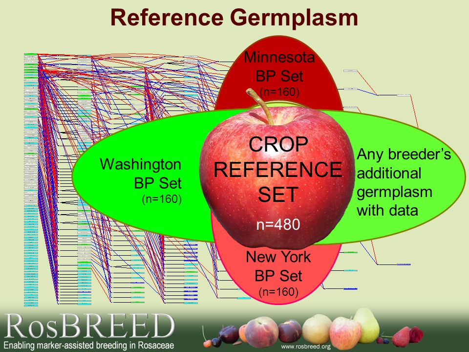 BREEDING PEDIGREE SETS Reference Germplasm Minnesota BP Set (n=160) Washington BP Set (n=160) New York BP Set (n=160) Any breeder's additional germplasm with data CROP REFERENCE SET n=480