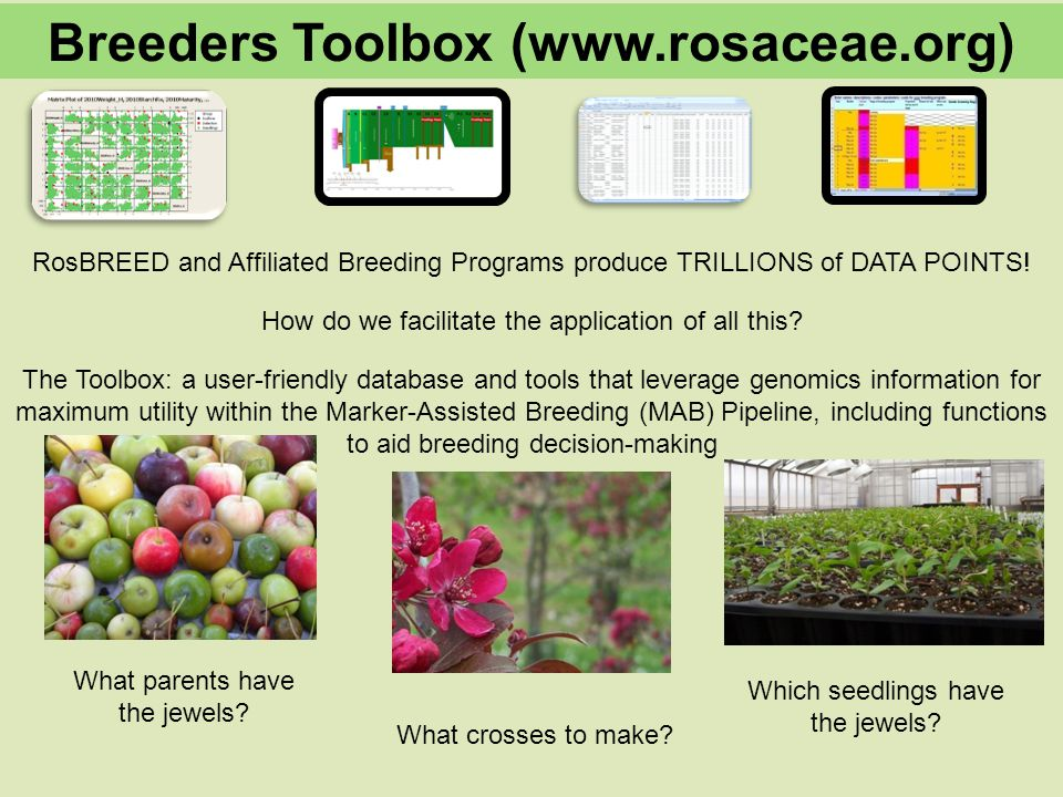 RosBREED and Affiliated Breeding Programs produce TRILLIONS of DATA POINTS.