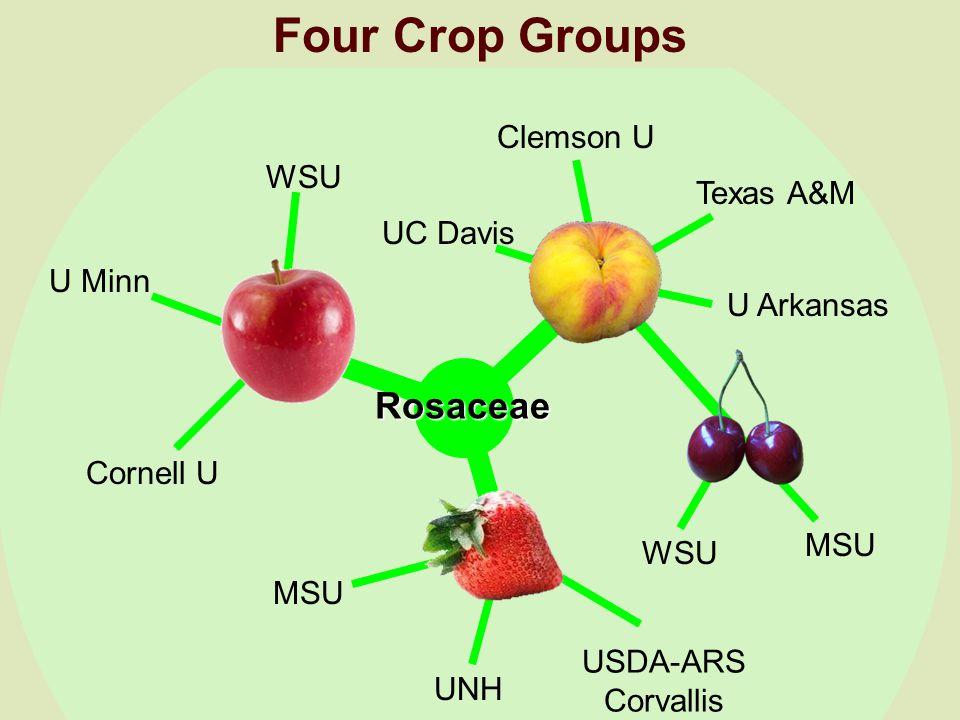 WSU U Minn Cornell U UC Davis Clemson U U Arkansas Texas A&M MSU UNH USDA-ARS Corvallis WSU MSU Rosaceae Four Crop Groups