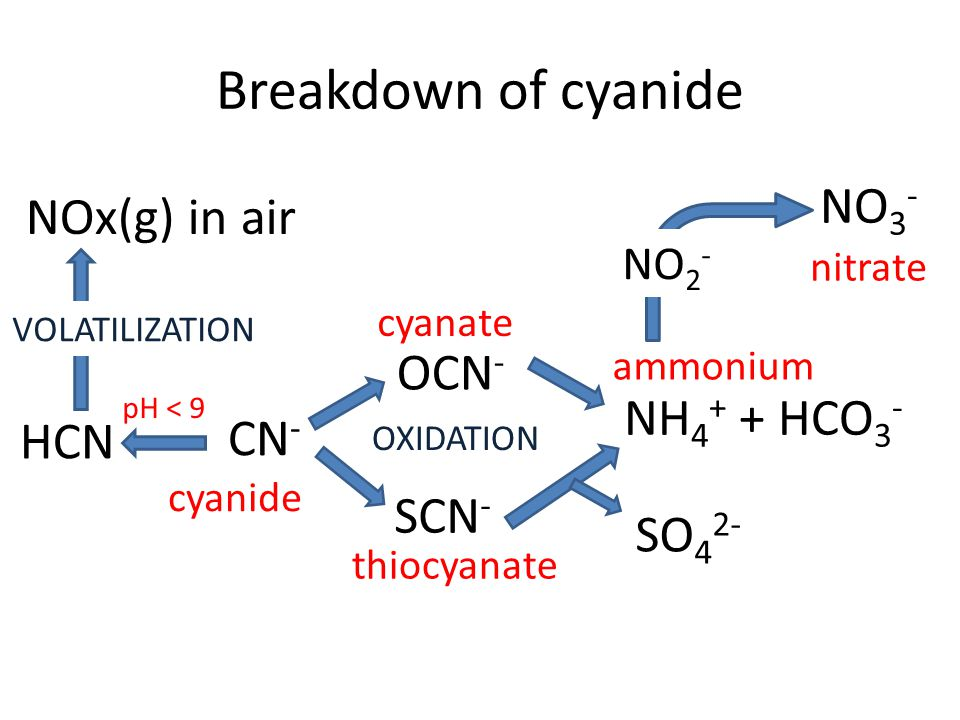Breakdown of cyanide CN - OCN - SCN - NH 4 + + HCO 3 - NO 3 - cyanide cyanate thiocyanate ammonium nitrate NO 2 - SO 4 2- HCN NOx(g) in air VOLATILIZATION OXIDATION pH < 9