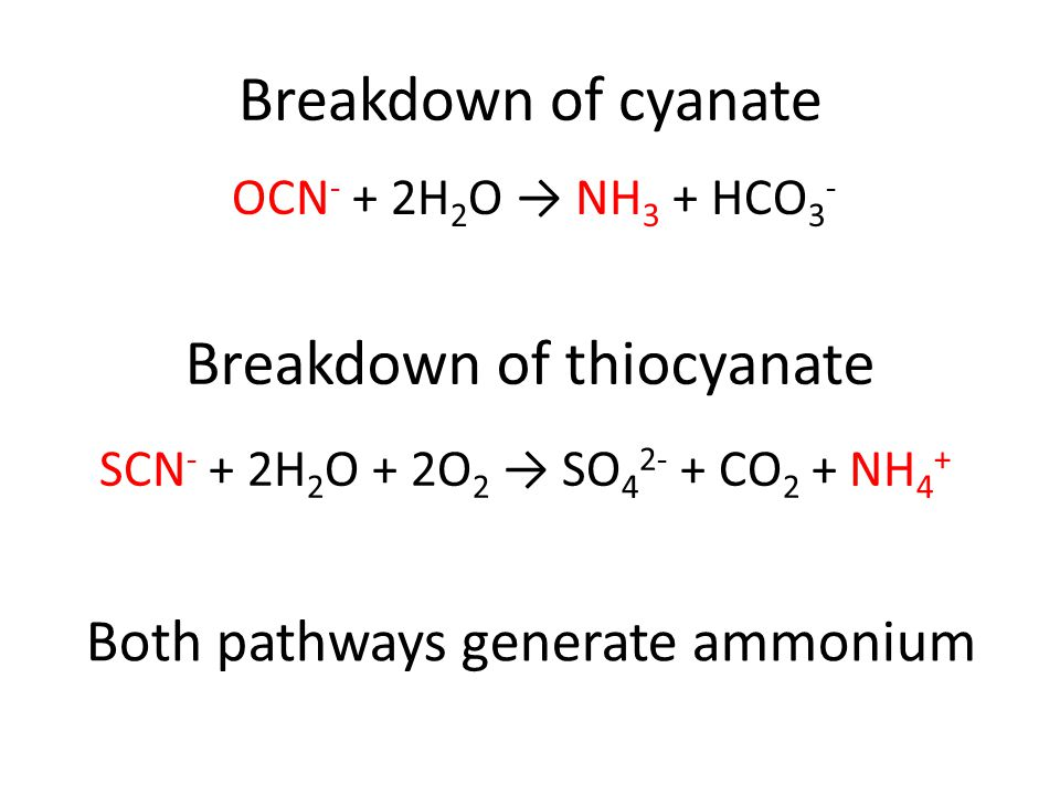 Breakdown of cyanate OCN - + 2H 2 O → NH 3 + HCO 3 - SCN - + 2H 2 O + 2O 2 → SO 4 2- + CO 2 + NH 4 + Breakdown of thiocyanate Both pathways generate ammonium