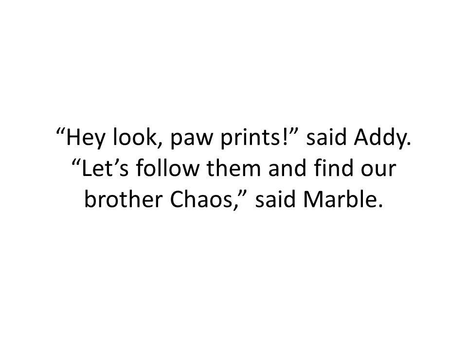 Hey look, paw prints! said Addy. Let's follow them and find our brother Chaos, said Marble.