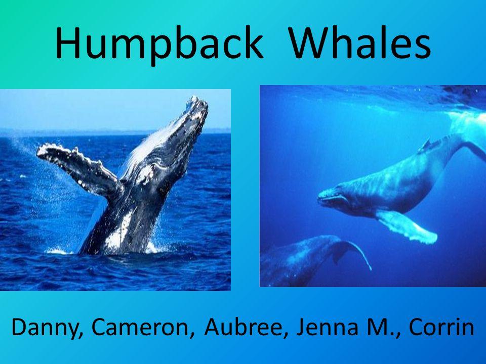 Humpback Whales Danny, Cameron, Aubree, Jenna M., Corrin