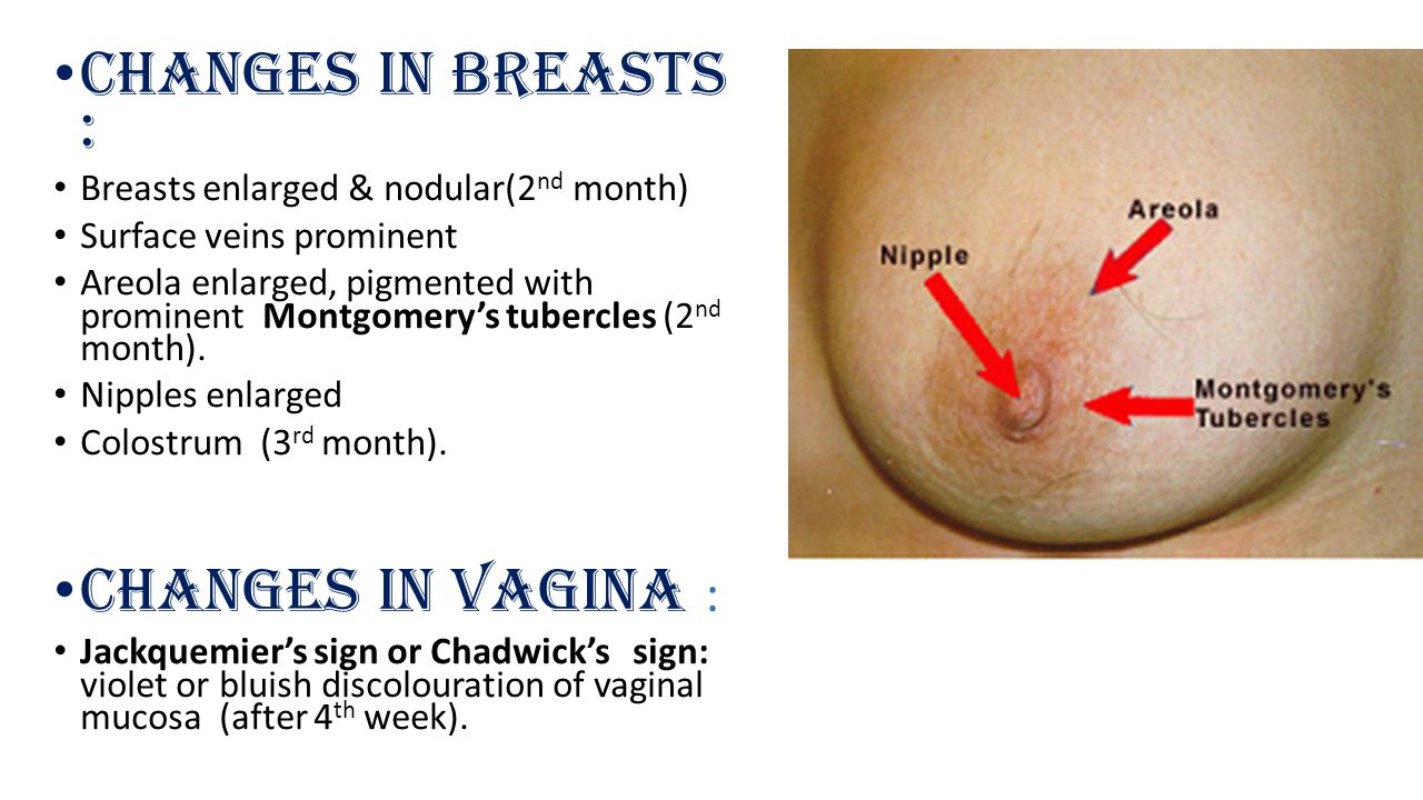 Changes in Breasts : Breasts enlarged & nodular(2 nd month) Surface veins prominent Areola enlarged, pigmented with prominent Montgomery's tubercles (2 nd month).